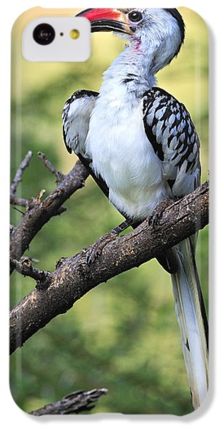 Red-billed Hornbill IPhone 5c Case by Tony Beck