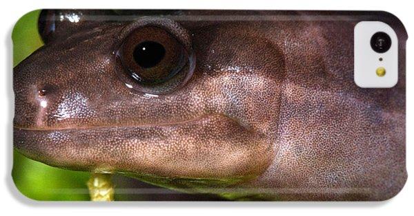 Red Hills Salamander IPhone 5c Case by Dant� Fenolio