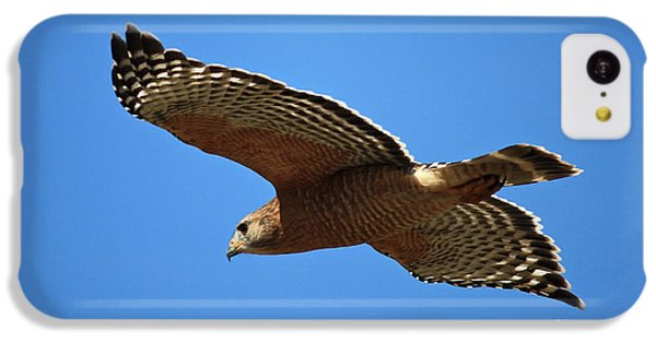 Red Shouldered Hawk In Flight IPhone 5c Case by Carol Groenen