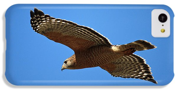 Red Shouldered Hawk In Flight IPhone 5c Case by Carol Groenen