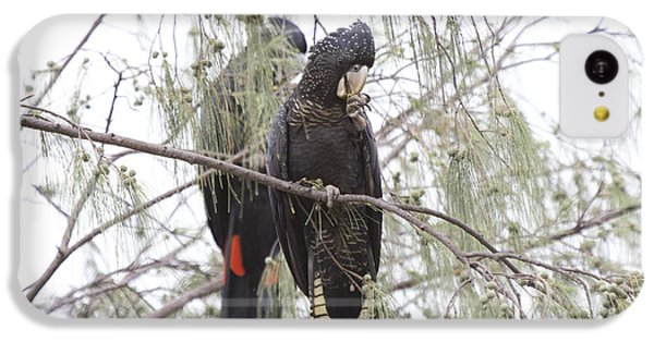 Red Tailed Black Cockatoos IPhone 5c Case by Douglas Barnard