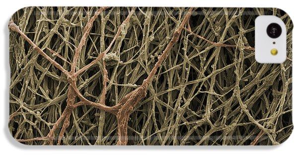 Sem Of Mycelium On Mushrooms IPhone 5c Case by Ted Kinsman
