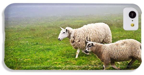 Sheep iPhone 5c Case - Sheep In Misty Meadow by Elena Elisseeva