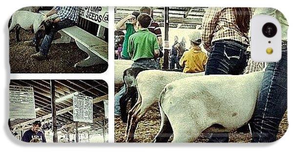 Ohio iPhone 5c Case - Sheep Show by Natasha Marco