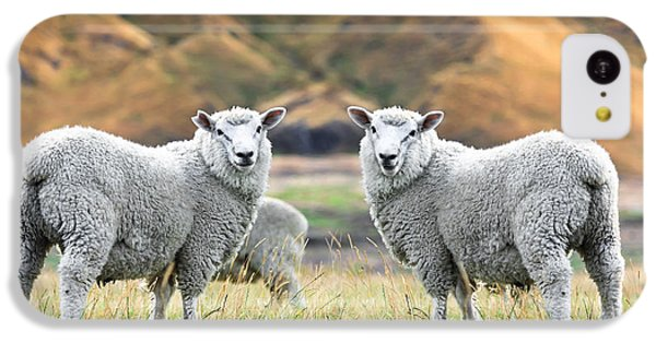 Sheep iPhone 5c Case - Sheeps by MotHaiBaPhoto Prints