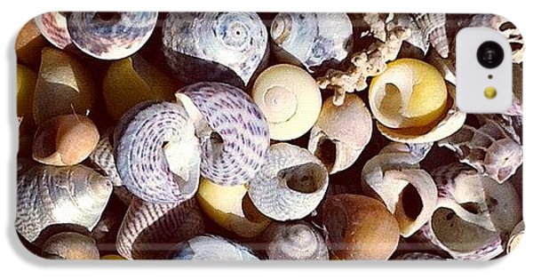Shells From Brittany IPhone 5c Case by Nic Squirrell