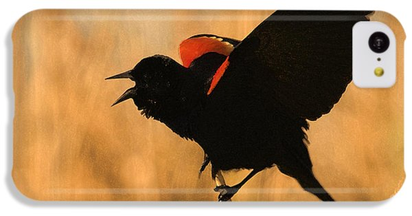 Singing At Sunset IPhone 5c Case by Betty LaRue