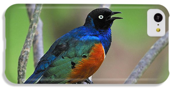 Superb Starling IPhone 5c Case by Tony Beck
