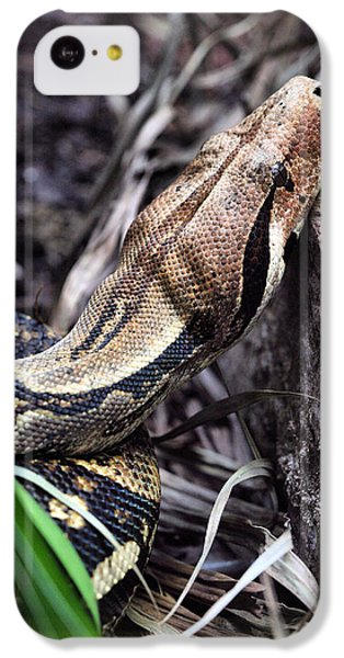 The Boa IPhone 5c Case by JC Findley