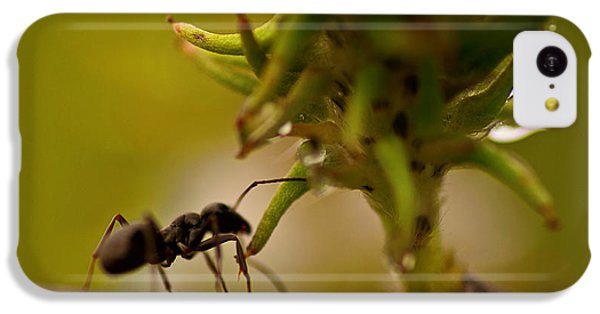 Ant iPhone 5c Case - The Harvester by Susan Capuano