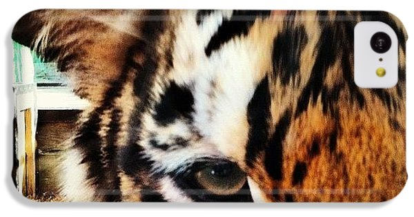 Tiger IPhone 5c Case