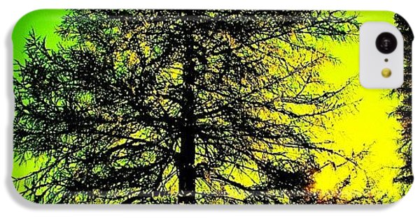 Cool iPhone 5c Case - Tree by Luisa Azzolini
