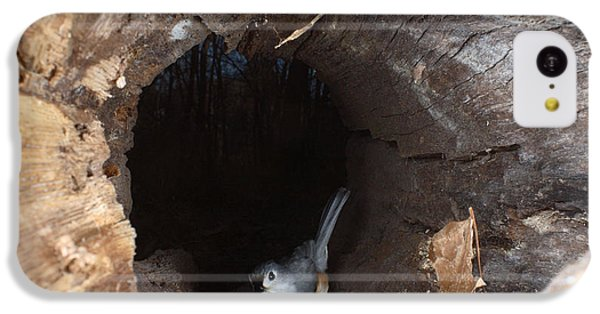 Tufted Titmouse In A Log IPhone 5c Case by Ted Kinsman
