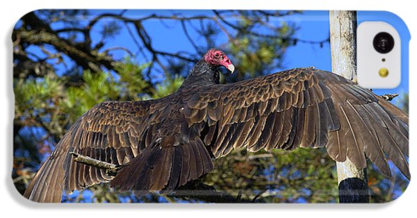 Turkey Vulture With Wings Spread IPhone 5c Case by Sharon Talson