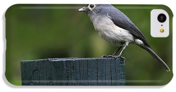 White-eyed Slaty Flycatcher IPhone 5c Case by Tony Beck