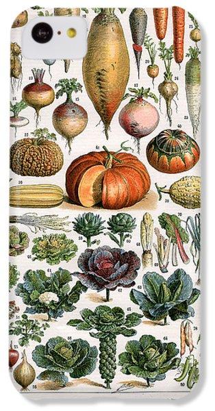 Illustration Of Vegetable Varieties IPhone 5c Case