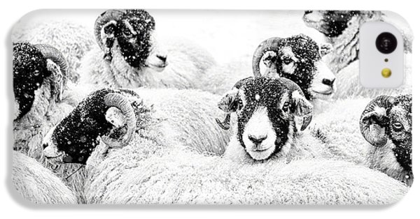 Sheep iPhone 5c Case -  In Winters Grip by Janet Burdon