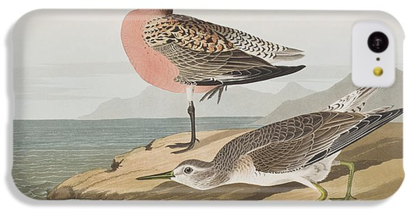 Red-breasted Sandpiper  IPhone 5c Case by John James Audubon