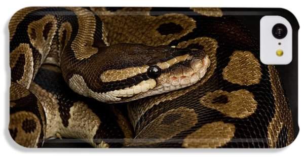 Burmese Python iPhone 5c Case - A Ball Python Python Regius by Joel Sartore