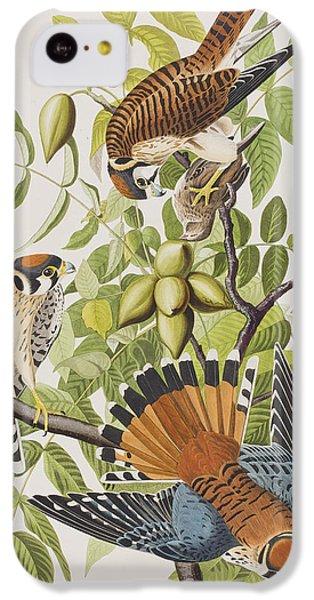 American Sparrow Hawk IPhone 5c Case by John James Audubon