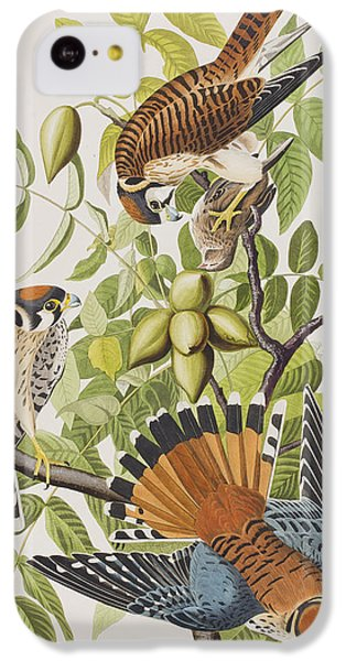 American Sparrow Hawk IPhone 5c Case by John James Audubon