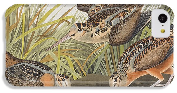 American Woodcock IPhone 5c Case by John James Audubon
