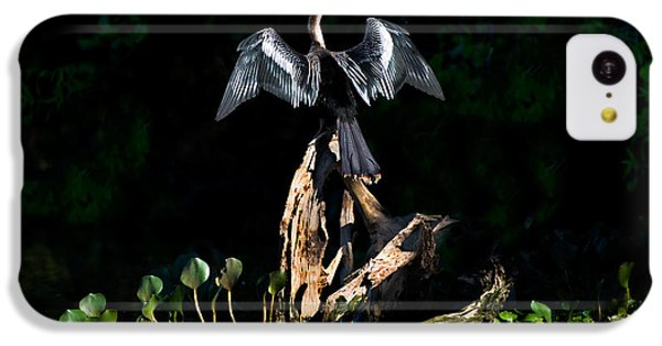 Anhinga iPhone 5c Case - Anhinga Anhinga Anhinga, Pantanal by Panoramic Images
