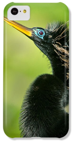 Anhinga iPhone 5c Case - Anhinga Anhinga Anhinga, Tortuguero by Panoramic Images