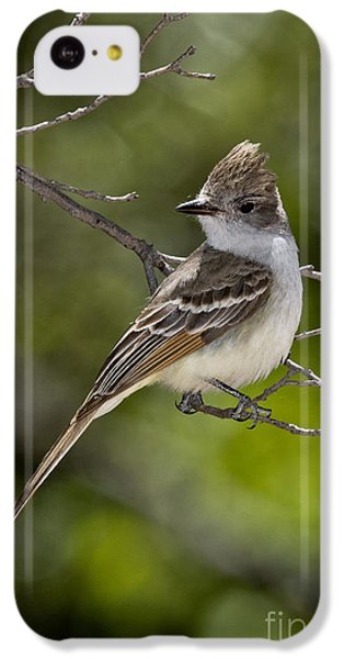 Ash-throated Flycatcher IPhone 5c Case by Anthony Mercieca