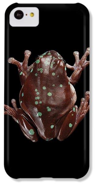 Australian Green Tree Frog, Or Litoria Caerulea Isolated Black Background IPhone 5c Case by Sergey Taran