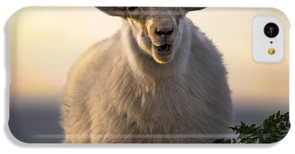 Sheep iPhone 5c Case - Baa Baa by Angel Ciesniarska