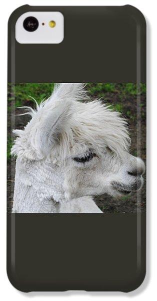 Baby Llama IPhone 5c Case by Ellen Henneke