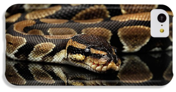 Ball Or Royal Python Snake On Isolated Black Background IPhone 5c Case by Sergey Taran