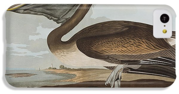 Brown Pelican IPhone 5c Case by John James Audubon