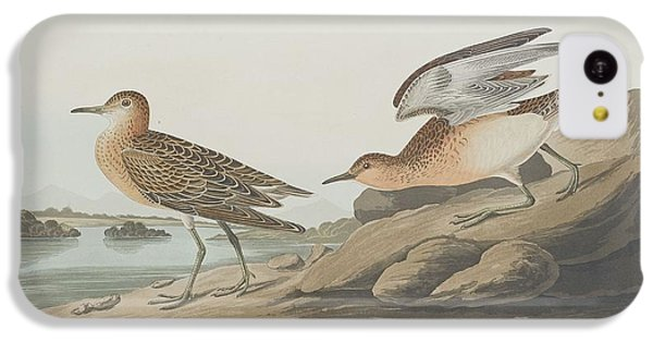 Buff-breasted Sandpiper IPhone 5c Case by Anton Oreshkin