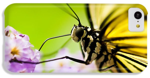 Butterfly IPhone 5c Case by Sebastian Musial