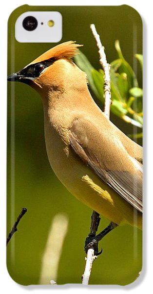 Cedar Waxwing Closeup IPhone 5c Case