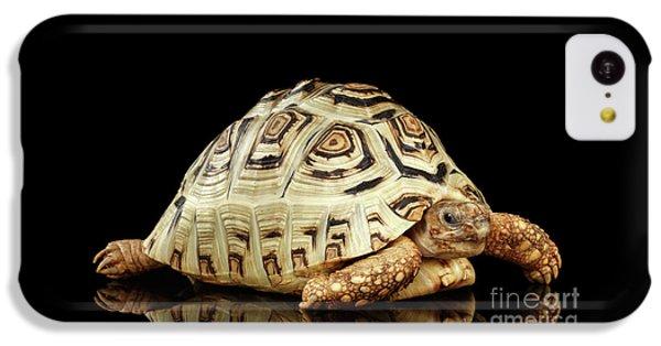 Closeup Leopard Tortoise Albino,stigmochelys Pardalis Turtle With White Shell On Isolated Black Back IPhone 5c Case