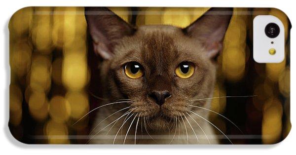 Cat iPhone 5c Case - Closeup Portrait Burmese Cat On Happy New Year Background by Sergey Taran