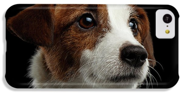 Closeup Portrait Of Jack Russell Terrier Dog On Black IPhone 5c Case