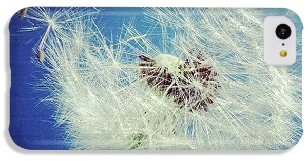 Detail iPhone 5c Case - Dandelion And Blue Sky by Matthias Hauser