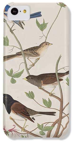 Finches IPhone 5c Case by John James Audubon