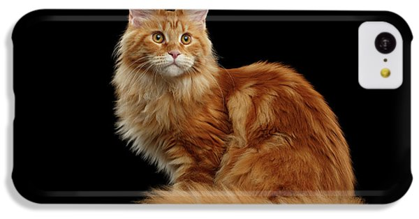 Cat iPhone 5c Case - Ginger Maine Coon Cat Isolated On Black Background by Sergey Taran