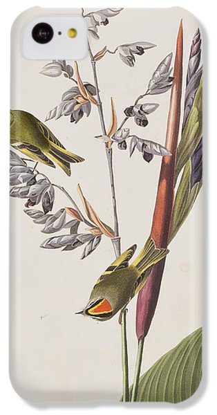 Golden-crested Wren IPhone 5c Case by John James Audubon