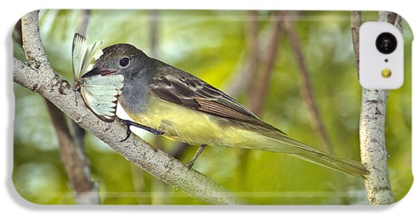 Great Crested Flycatcher IPhone 5c Case