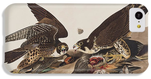 Great-footed Hawk IPhone 5c Case by John James Audubon