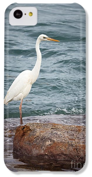 Great White Heron IPhone 5c Case by Elena Elisseeva