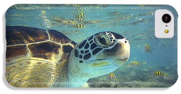 Turtle iPhone 5c Case - Green Sea Turtle Balicasag Island by Tim Fitzharris
