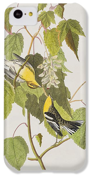 Hemlock Warbler IPhone 5c Case by John James Audubon