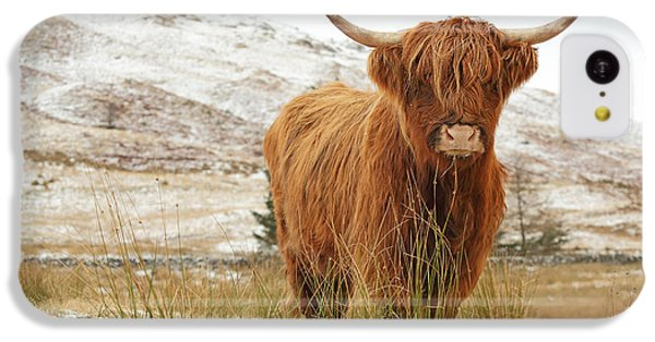 Cow iPhone 5c Case - Highland Cow by Grant Glendinning